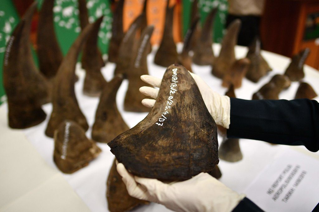 Picture of person holding a rhino horn