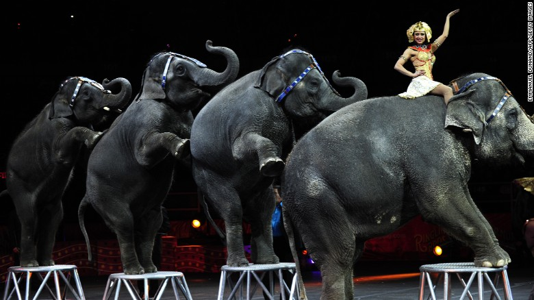 NJ Outlaws Wild Animals Circus Acts