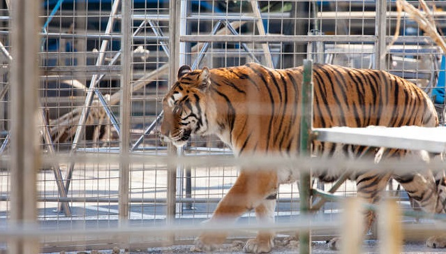 Second State Bans Wild Circus Animals
