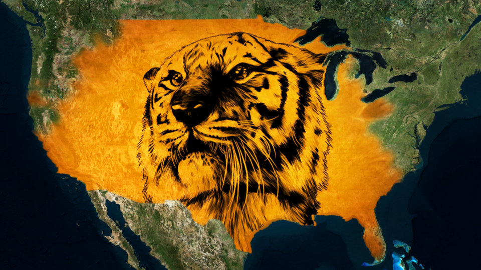 'Tiger King' Popularity Highlights Market for Big Cats in U.S.