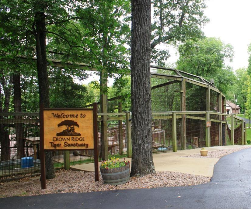 Tiger from Black Pine Animal Sanctuary