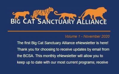 BCSA eNewsletter (Vol 1) – November 2020